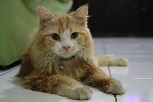 Free stock photo of animal, animal photography, cat