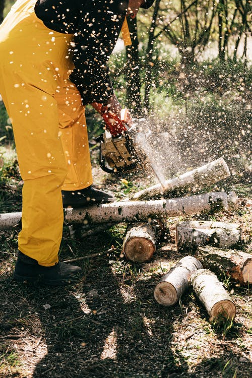 Crop worker cutting log in forest
