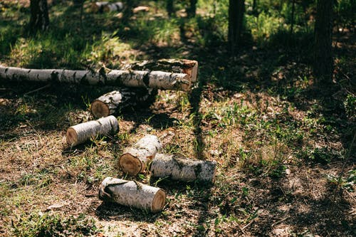 Stacked cut woods placed near log on forest lawn in trees shadows on sunny summer day