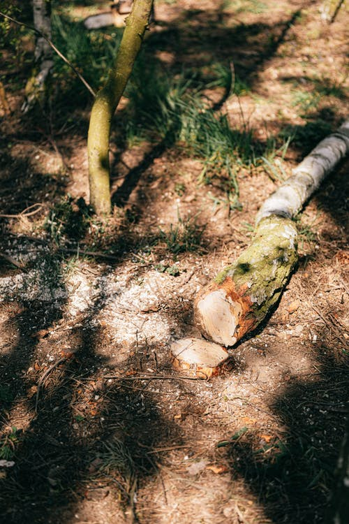 Log and shrub in summer forest
