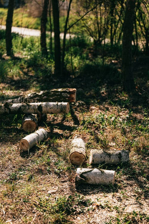 Woods and logs on forest meadow near rural road