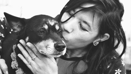 Immagine gratuita di amore, amore del cane, animale domestico, bianco e nero