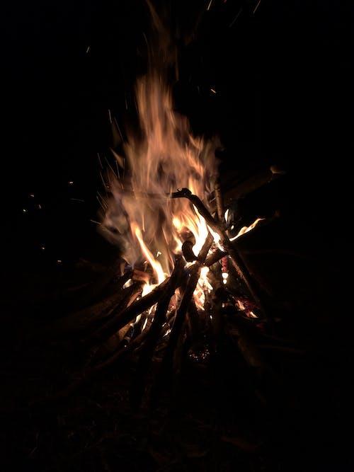 Free stock photo of bonfire, fire