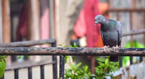 Immagine gratuita di ali, animale, colore, grigio