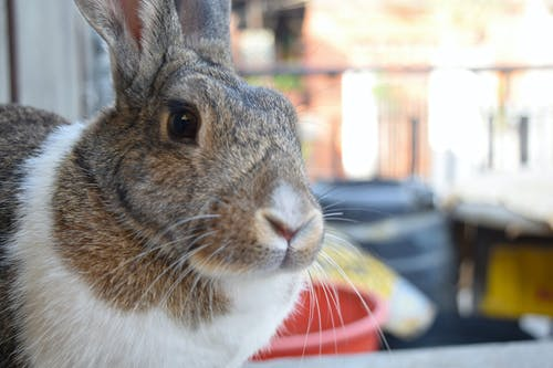 Immagine gratuita di animale, animale domestico, animali carini, carino