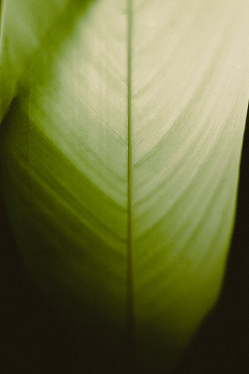 Texture of green leaf on dark surface