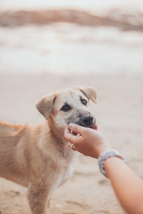 Gratis arkivbilde med bedårende, berøring, brun hund, dyr