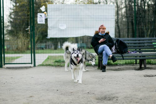 Female chatting on cellphone while sitting with crossed legs on bench near content purebred dogs walking with tongue out on street