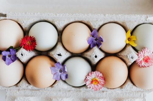 Darmowe zdjęcie z galerii z czerwony kwiat, fioletowe kwiaty, jajka, jajko wielkanocne