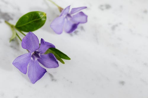 Purple Flower on White Surface