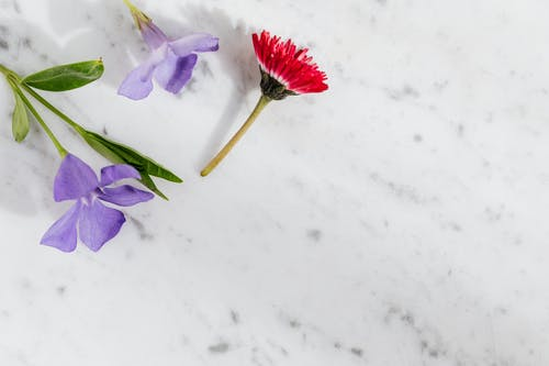 Blooming flowers on white marble surface