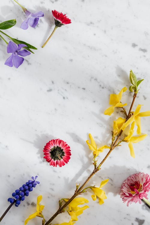 Delicate twig with blooming flowers on marble background