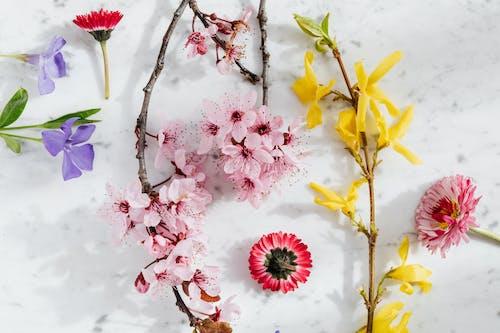 Fotos de stock gratuitas de amable, amarillo, amor, aromático