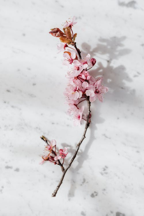 Photo of Pink Flowers on White Surface