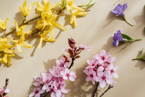 Blooming multicolored flowers on beige background