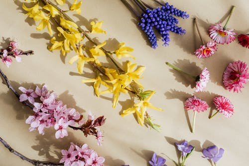 Bright colorful blooming flowers on beige background