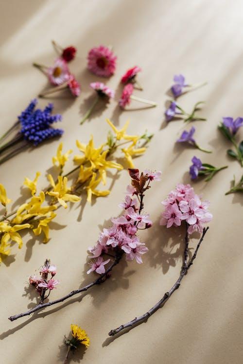Základová fotografie zdarma na téma aroma, aromatický, béžová, béžové pozadí