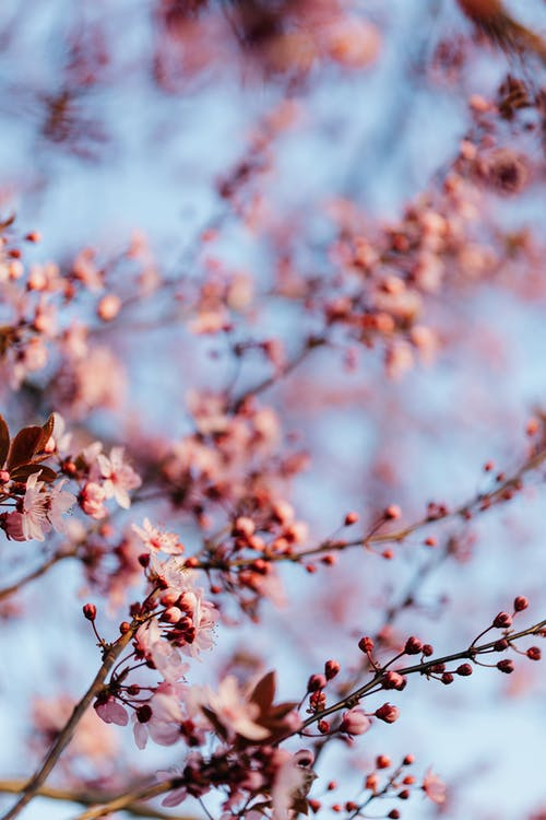 Blossoms of fruit tree growing in park
