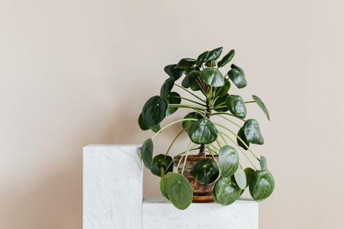 Decorative potted plant on marble shelf