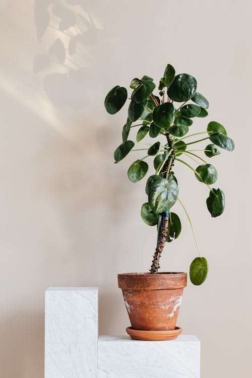 Houseplant in clay pot on white table