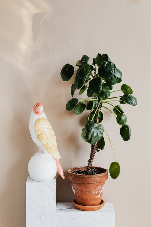 Houseplant and parrot statuette on white table