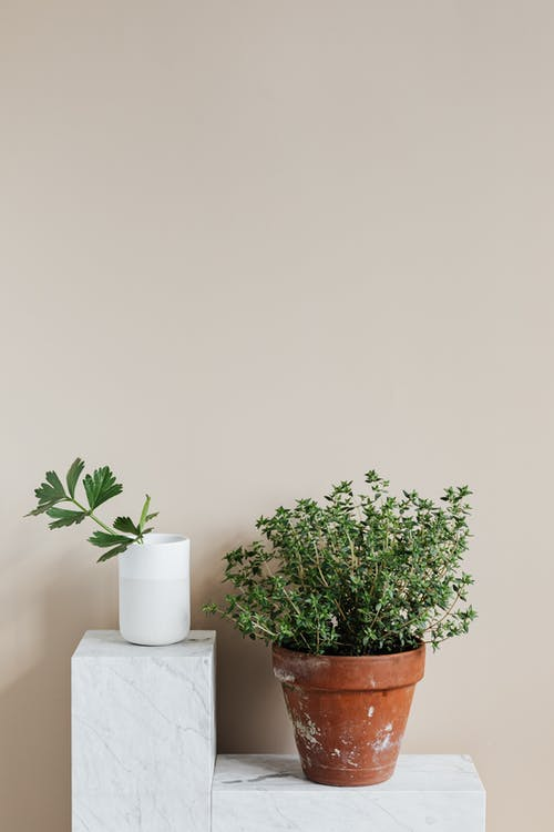 Potted plant and white vase with green twig placed on marble shelf