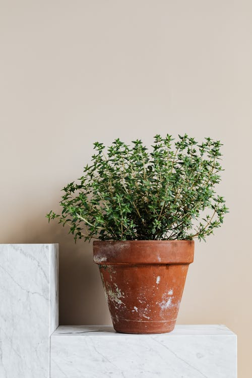 Potted delicate green plant on marble stand