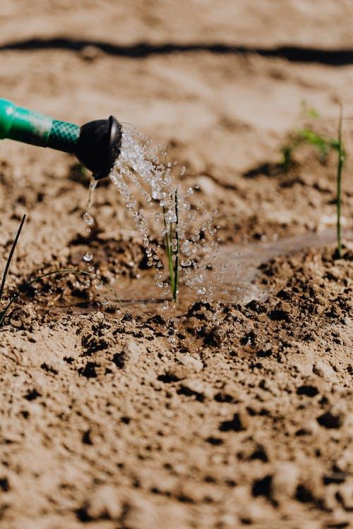 Green hose watering delicate growing plants
