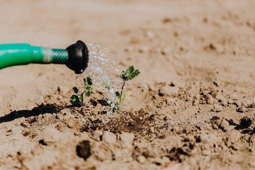 エコ, エコロジー, オーガニック, ケアの無料の写真素材