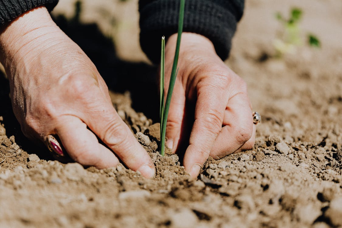 Faceless woman working with soil in garden