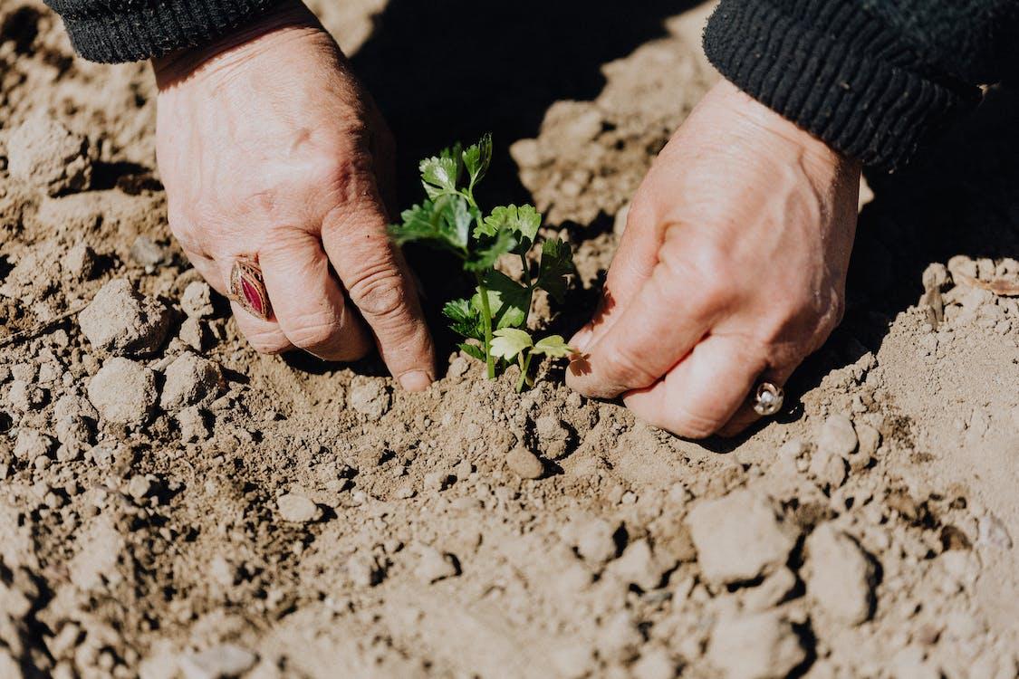 Photos gratuites de agriculteur, agriculture, anonyme
