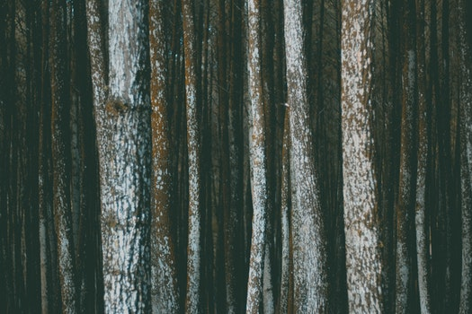 Free stock photo of forest, texture, trees, bark