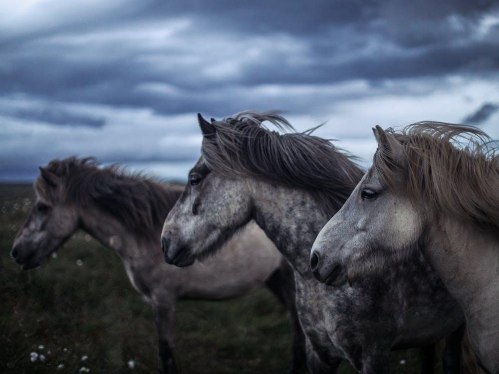 Horses on a Grass Field Under a Cloudy Sky