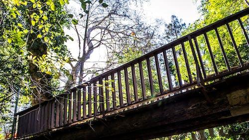 Kostnadsfri bild av älva, berättelse, besök, bro