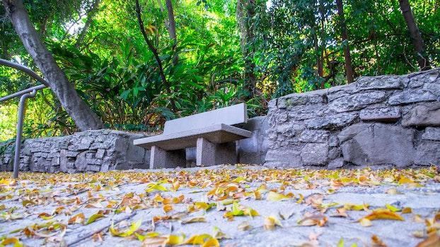 Free stock photo of bench, city, restaurant, nature