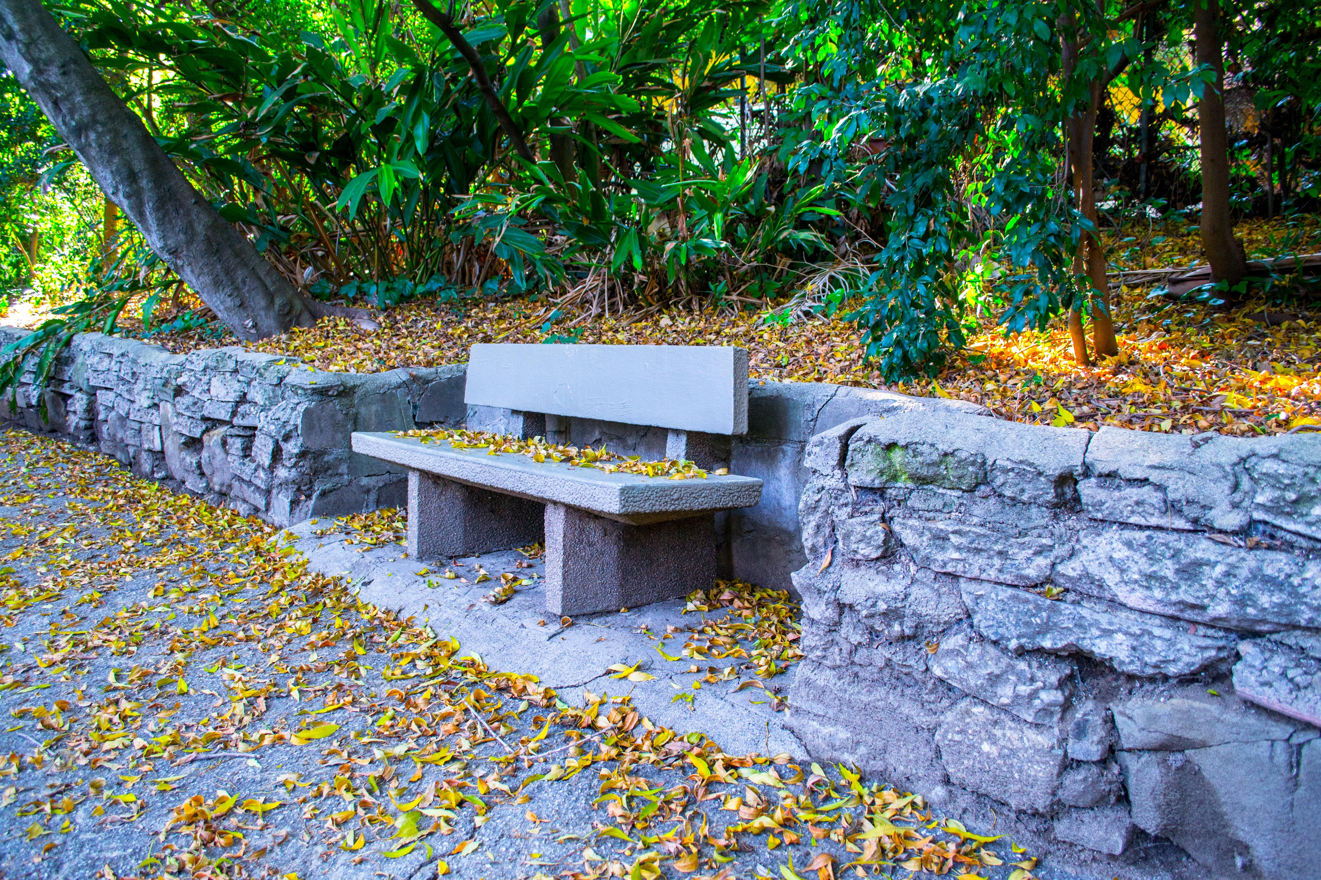 bench, dried leaves, environment