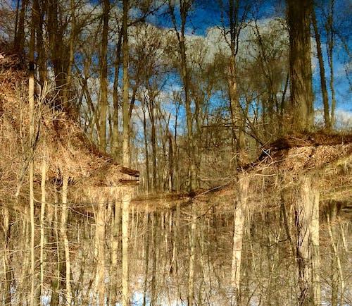 Free stock photo of fish pond, light reflection, ponds