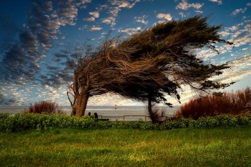 Free stock photo of speed wind