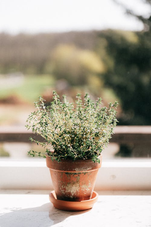 Potted plant on windowsill in daylight