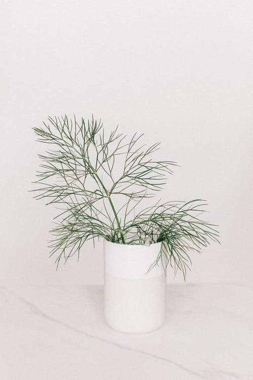 White vase with thin leaved plant