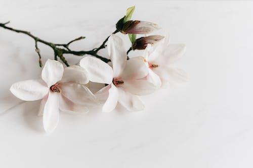 Imagine de stoc gratuită din alb, anotimp, arc