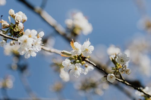 Blooming apricot tree branch on beautiful day