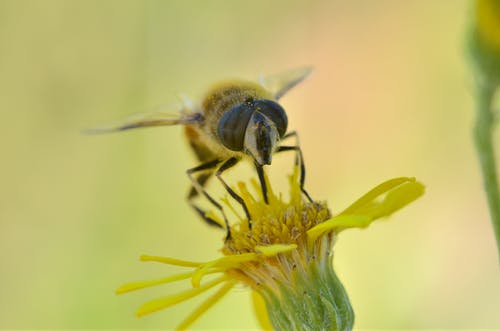Shallow Focus Photography of Yellow Bee on Flower