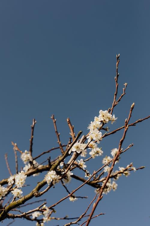 Foto stok gratis alam, berkembang, bersemangat, bunga