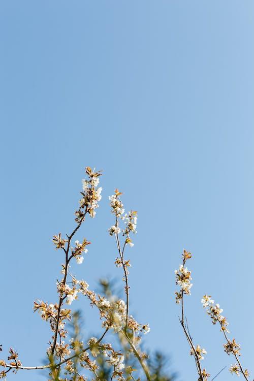 Foto stok gratis alam, aprikot, aroma