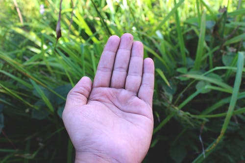Free stock photo of clean, clean hand, greenery, hand
