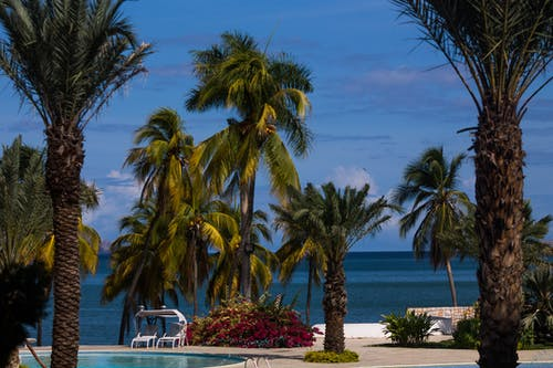 Free stock photo of beach life, caribbean sea, coast line, palms