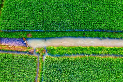 Top View Photo of Green Farmland