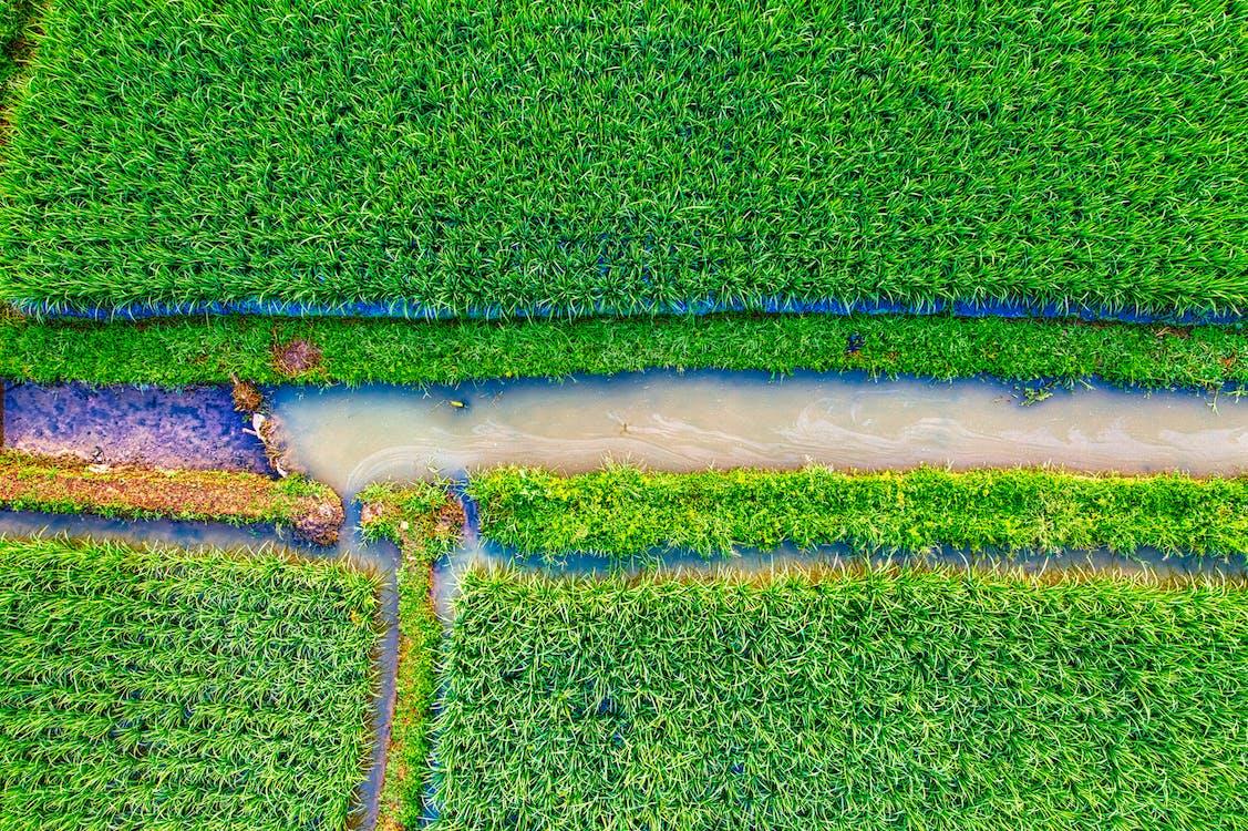 Top View Photo of Green Farmland