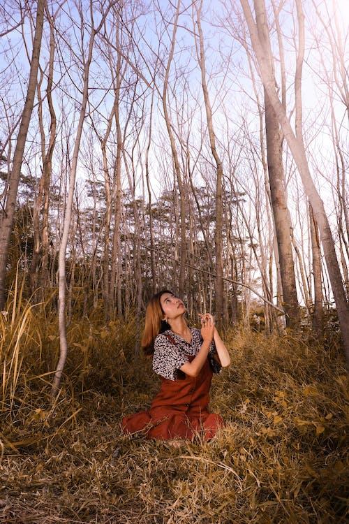 Gratis lagerfoto af alvorlige, bare træer, brunt græs, efterår